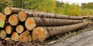 Read more about the article Экспорт необработанной древесины из Германии в 2020 году увеличился на 42,6%