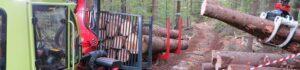 Швейцария: лесному хозяйству  нужны справедливые,  рыночные цены на древесину в круглом виде!