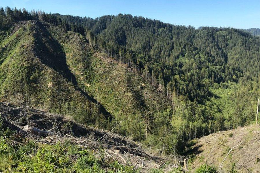 Исследовательский лесной эксперимент станет крупнейшим в США