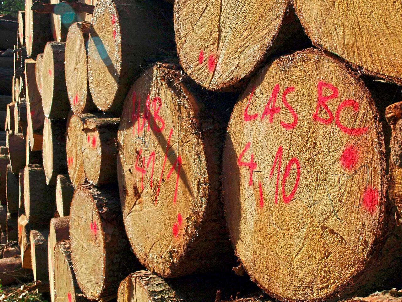 Для мелких лесовладельцев Германии «Постановление  о компенсации за ущерб лесам» пересмотрено