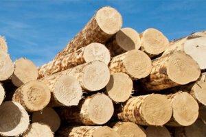 Длинномерные сосновые круглые лесоматериалы снова превышают 60 евро / м³ у лесной дороги