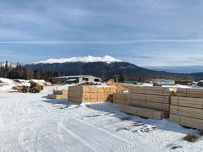 Создание ниши: BC Mill добивается успеха, перерабатывая древесину усохших деревьев