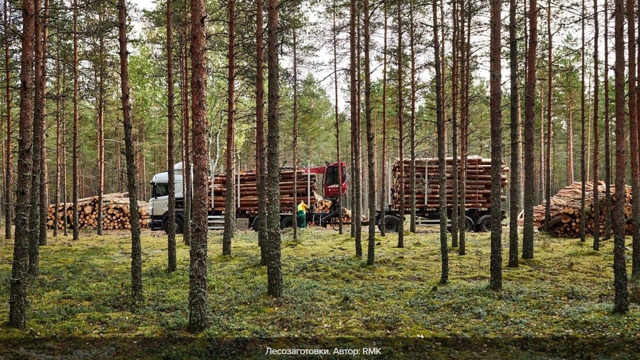 You are currently viewing Эстония: из-за жалоб активистов лесорубочные работы безпричинно останавливаются