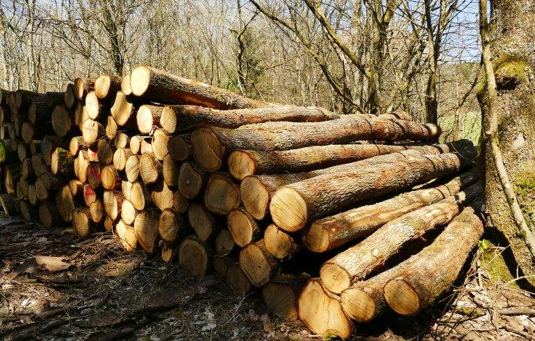 You are currently viewing Рейнланд-Пфальц(ФРГ): Профильное министерство поддерживает исследовательский проект по использованию мелкой древесины дуба в деревянном строительстве