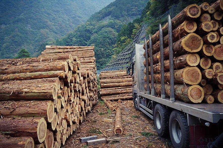 Домостроение в Великобритании под давлением мирового дефицита древесины