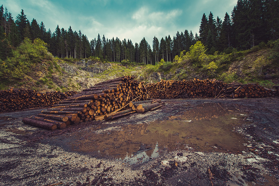 Производственные мощности лесопильных заводов достигли максимума со времен Великой рецессии