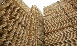 Read more about the article Ослабление ограничений обрушило цены на древесины