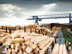 Read more about the article Проблему поставок древесины промышленным компаниям в Германии решают на уровне Федерального Правительства.