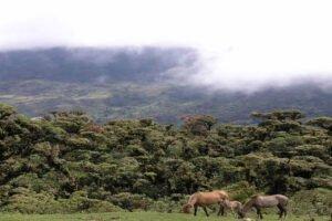 Read more about the article Обширные леса России поглощают гораздо больше углерода, чем считалось ранее