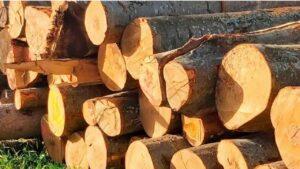 Read more about the article Энергия из древесины покрывает более 40% потребности в отоплении помещений в Австрии.
