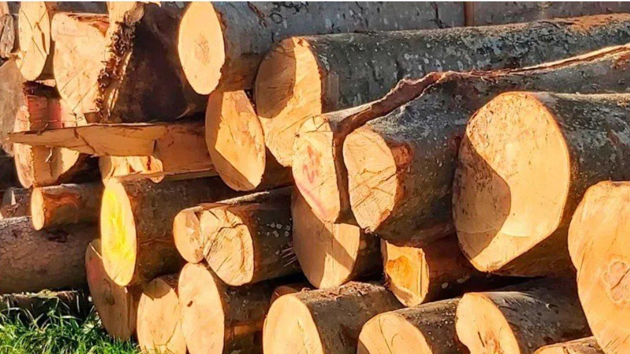 You are currently viewing Энергия из древесины покрывает более 40% потребности в отоплении помещений в Австрии.