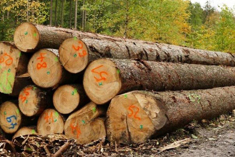 Германия: компании, увеличивающие стоимость, настаивают на увеличении объема рубок зеленой древесины