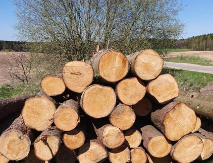 You are currently viewing Лес рубят – щепки летят. В чем угроза роста мировых цен на древесину