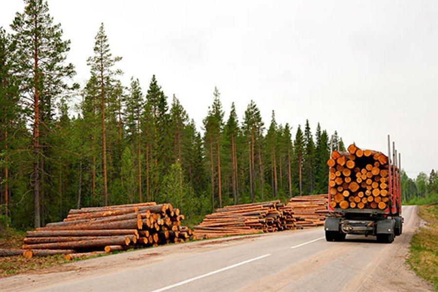 You are currently viewing Рост цен на круглый лес в Финляндии обусловлен повышенным спросом