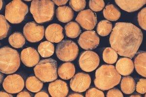 Read more about the article В Лесном кодексе зафиксируют понятия необработанных и обработанных лесоматериалов