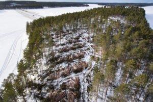 Read more about the article ЕС посадит три миллиарда деревьев к 2030 году в соответствии с новым планом ведения лесного хозяйства