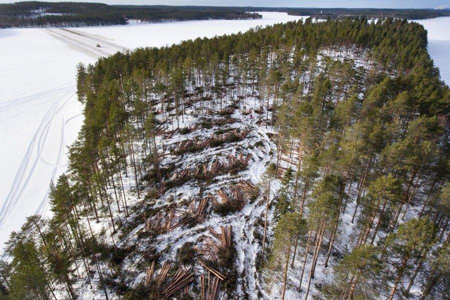 You are currently viewing ЕС посадит три миллиарда деревьев к 2030 году в соответствии с новым планом ведения лесного хозяйства