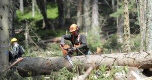 Read more about the article Чешские дрова в большом количестве уплывают в Китай. Лесники хвалят неприхотливых клиентов