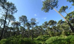 Read more about the article «Хватит сжигать древесину»: исполнительную власть ЕС обвинили в принесении лесов в жертву
