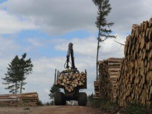 Read more about the article «Пираты и мэры»  хотят заставить  Леса Чешской Республики продавать древесину местным лесопилкам