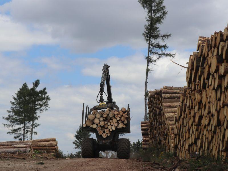 You are currently viewing «Пираты и мэры»  хотят заставить  Леса Чешской Республики продавать древесину местным лесопилкам