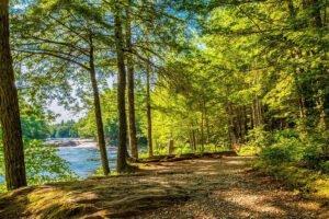 Read more about the article Канадская провинция Новая Шотландия инвестирует 5,4 млн долларов в экологическое лесоводство и обучение