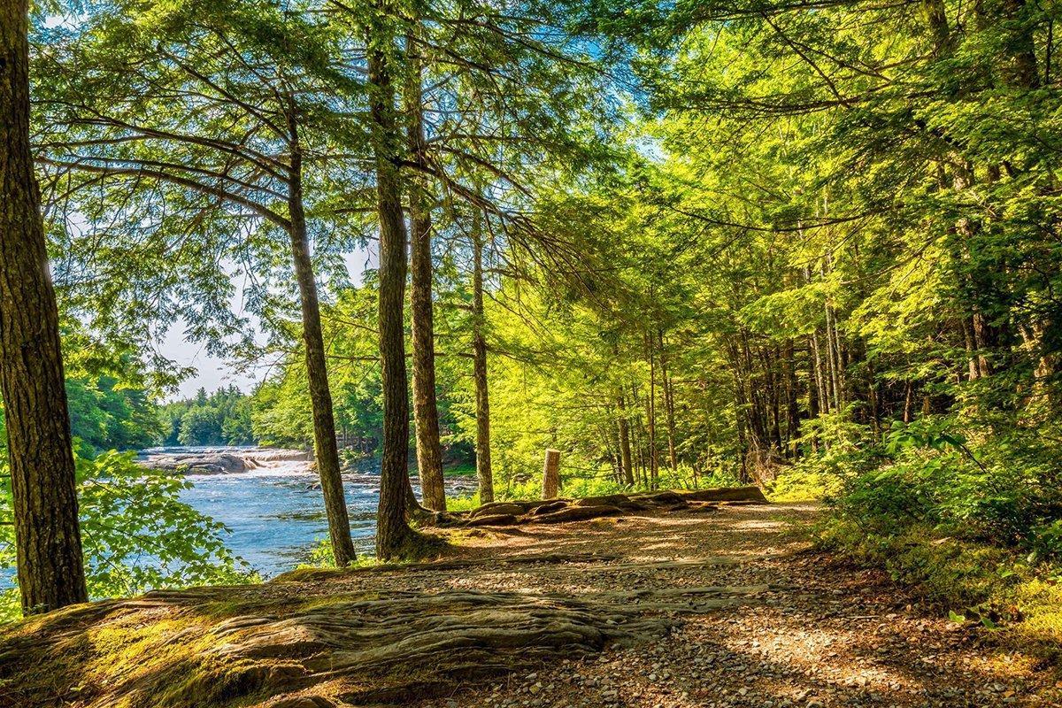 You are currently viewing Канадская провинция Новая Шотландия инвестирует 5,4 млн долларов в экологическое лесоводство и обучение