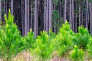 Read more about the article Новая организация займется исследованиями лесов в Европе