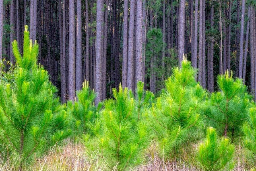 You are currently viewing Новая организация займется исследованиями лесов в Европе