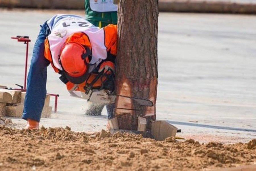 You are currently viewing Что происходит на рынке древесины: проблемы и решения