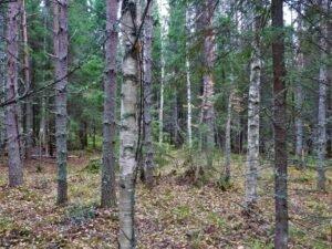 Read more about the article Евросоюз намерен платить денежную компенсацию за сохранение лесов нетронутыми