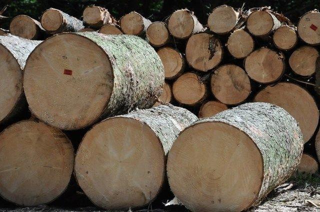 You are currently viewing Учет древесины в РБ обещает быть значительно продуманнее и дешевле украинского