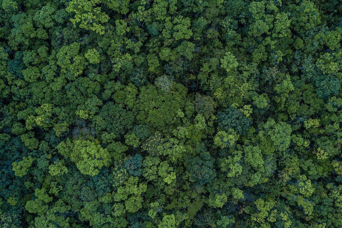 You are currently viewing Эксперты считают, что сажать деревья «бессмысленно» в борьбе с изменением климата