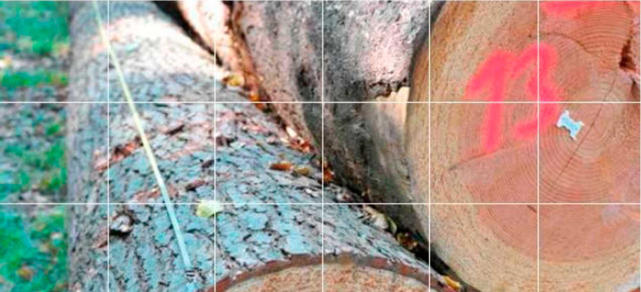 Read more about the article Рамочное соглашение по торговле необработанной древесиной (RVR) все чаще используется на практике в Германии