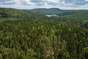 Read more about the article В Швеции зарегистрирована большая площадь для  заготовки леса