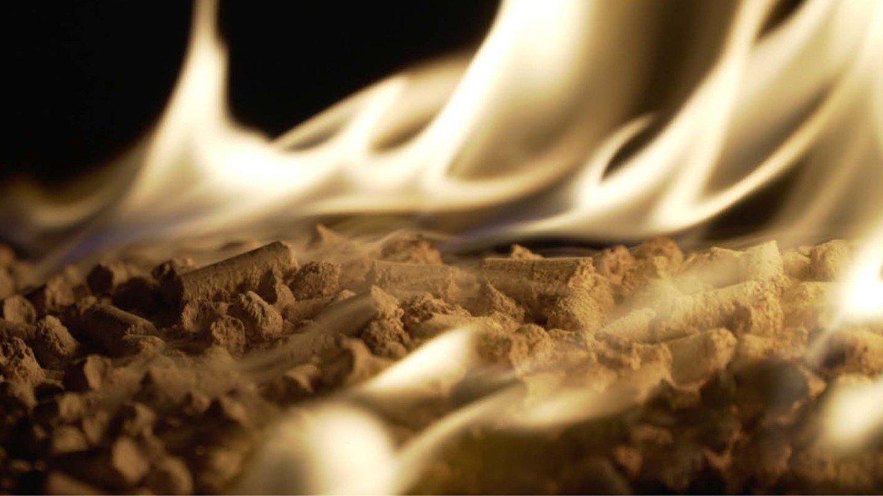 You are currently viewing Сжигание лесов для производства энергии: ЕС и мир борются с наукой о биомассе
