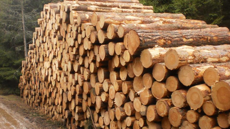 You are currently viewing Чехия: Цена на древесину за последние месяцы выросла на десятки процентов и буквально бьет рекорды.