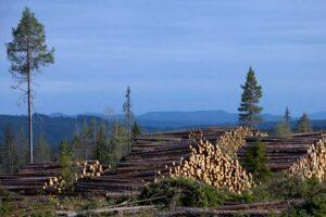 Read more about the article Крупнейший частный лесовладелец в Европе защищает стратегию лесозаготовок
