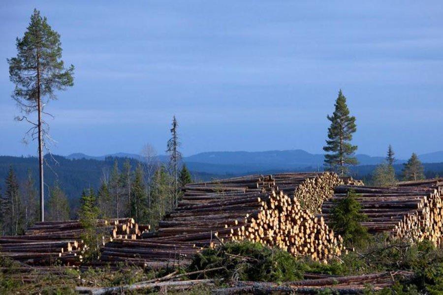 You are currently viewing Крупнейший частный лесовладелец в Европе защищает стратегию лесозаготовок