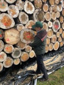Read more about the article Сохранение поврежденной короедом древесины под защитным покрытием: новые испытания показали многообещающий результат