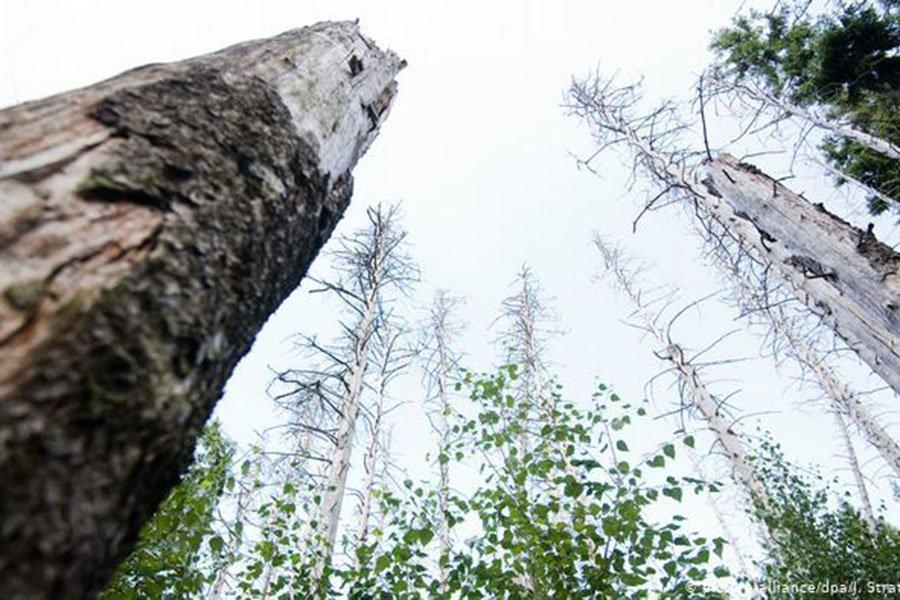 You are currently viewing Немецкий лесной саммит: 3 способа возродить умирающий лес