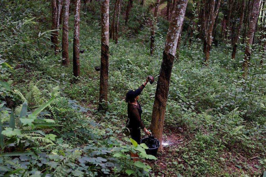 You are currently viewing Китай объявляет об обязательстве высаживать деревья для увеличения лесов и сокращения выбросов углерода