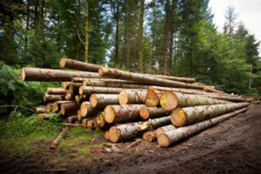 You are currently viewing Лесные компании и домостроители настаивают на увеличении заготовки леса на территории США