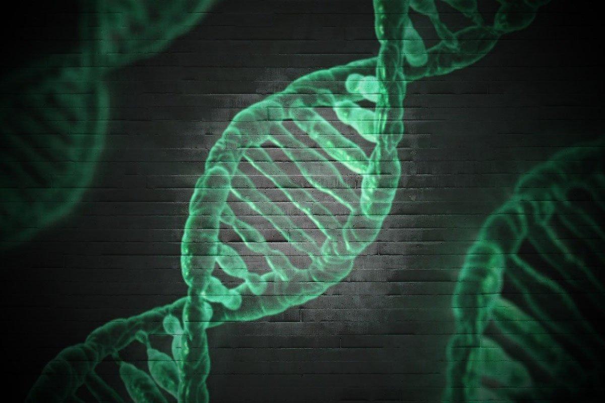 You are currently viewing ДНК дерева впервые стала доказательством вины в суде