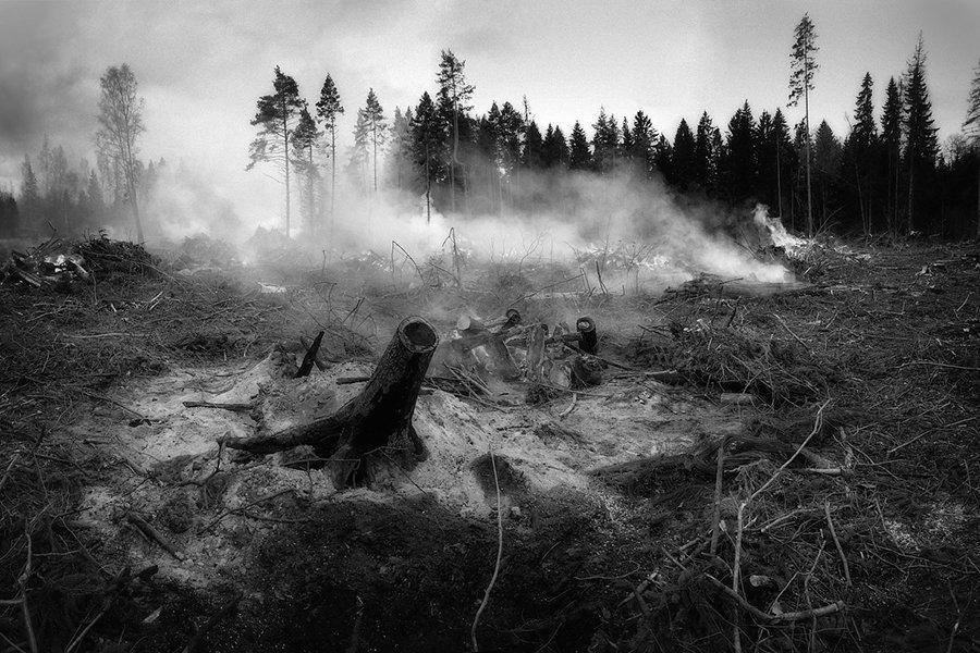 You are currently viewing Лесные пожары ограничивают производство пиломатериалов хвойных пород в Канаде
