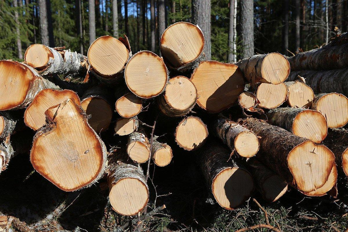 Read more about the article За семь месяцев торговля круглым лесом в Финляндии выросла на 56%