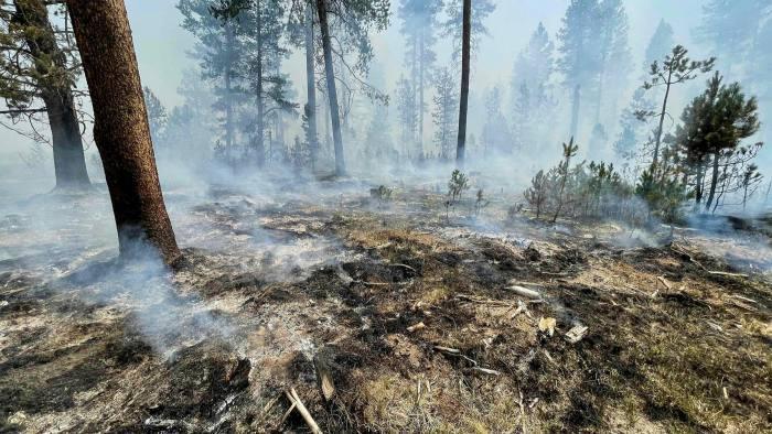 You are currently viewing Лесные пожары в США угрожают компенсации выбросов углекислого газа, поскольку горят деревья, связанные с углеродными проектами