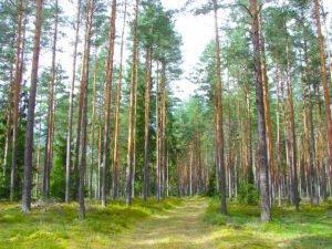 Read more about the article Заготовка круглого леса в Латвии в первом полугодии 2021 года увеличилась на 21%