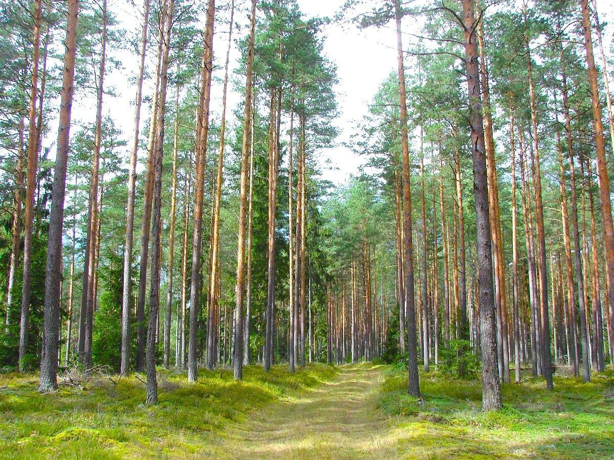 You are currently viewing Заготовка круглого леса в Латвии в первом полугодии 2021 года увеличилась на 21%