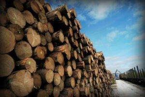 Read more about the article Алеш Эрбер: «Управлять компанией «Леса Чешской республики» указывая кому и сколько она должна продать древесины,  — это путь в тупик…»